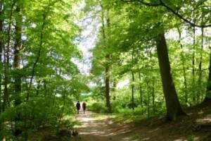 Dutch Outdoors Hiken